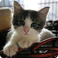 Adopt A Pet :: Remi - Sherman Oaks, CA