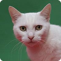 Adopt A Pet :: Namine - Aiken, SC