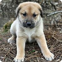 Adopt A Pet :: Kingston - Alpharetta, GA