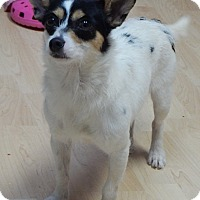 Adopt A Pet :: Delilah(10 lb) New Pics/Video - SUSSEX, NJ
