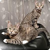 Adopt A Pet :: Kiara - Berkeley Hts, NJ