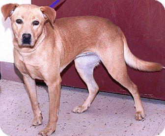 Labrador Retriever Mix Dog for adoption in McDonough, Georgia - Loran