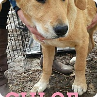 Adopt A Pet :: Chloe - Broken Arrow, OK