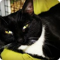 Adopt A Pet :: Cher - Lincoln, CA