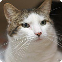 Adopt A Pet :: Forest - East Hartford, CT