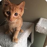 Adopt A Pet :: Jack - Jerseyville, IL