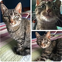 Adopt A Pet :: JuJuBe - Cincinnati, OH
