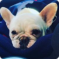 Adopt A Pet :: Bridgite Bardoux - Elgin, IL