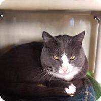 Adopt A Pet :: Marti - Fort Collins, CO