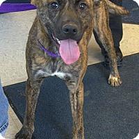Adopt A Pet :: Thomas - Avon, OH