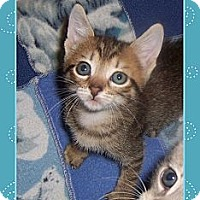 Adopt A Pet :: Tiny Girl - South Plainfield, NJ