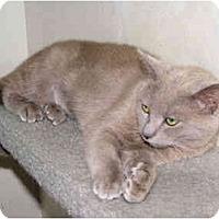 Adopt A Pet :: Goldie - Colmar, PA