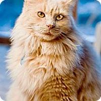 Adopt A Pet :: Castle - Grand Rapids, MI