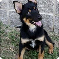 Adopt A Pet :: Missy - Arlington, TX