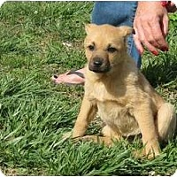Adopt A Pet :: Trouble - Westbrook, CT
