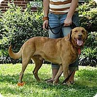 Adopt A Pet :: Willie - Lewisville, IN