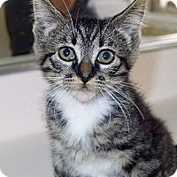 Adopt A Pet :: Dixie - Irvine, CA