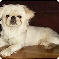 Adopt A Pet :: Fletcher - Mooy, AL