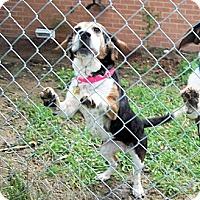 Adopt A Pet :: Talia - Novi, MI