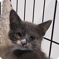 Adopt A Pet :: Calliope - Berkeley Hts, NJ