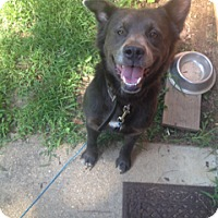 Adopt A Pet :: Smokey - Richmond, VA