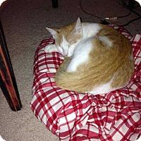 Adopt A Pet :: Annie - Kennesaw, GA