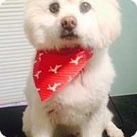 Adopt A Pet :: Fozzy - Irmo, SC