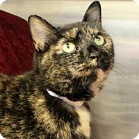 Adopt A Pet :: C-69851 Rosie - Westampton, NJ
