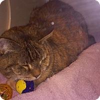 Adopt A Pet :: Little Girl - Franklin, NH