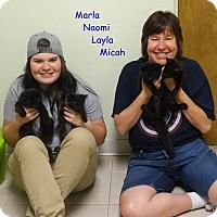 Adopt A Pet :: Naomi - Elyria, OH