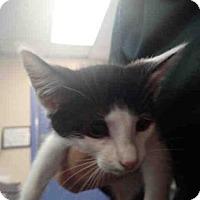 Adopt A Pet :: A593680 - Louisville, KY