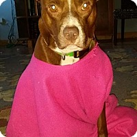 Adopt A Pet :: Wookie - Olive Branch, MS