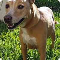 Adopt A Pet :: Ginger - Miami, FL