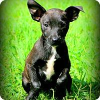 Adopt A Pet :: La Luna - Glastonbury, CT