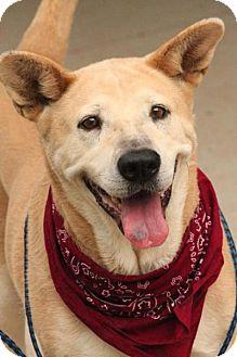 Carolina Dog/Retriever (Unknown Type) Mix Dog for adoption in Lebanon, Maine - Arizona