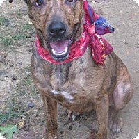 Shepherd (Unknown Type) Mix Dog for adoption in Voorhees, New Jersey - Paisley