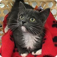 Adopt A Pet :: Gema - Montclair, CA