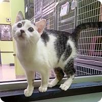 Adopt A Pet :: Bamboo - Janesville, WI