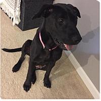 Adopt A Pet :: Betsy-adoption pending - Manhattan, KS