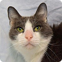 Adopt A Pet :: Smokey - Greenfield, IN
