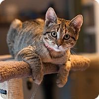 Adopt A Pet :: mink - Faribault, MN