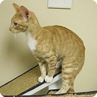 Adopt A Pet :: Jillian - Georgetown, TX