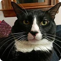 Adopt A Pet :: Barney - Somerville, MA