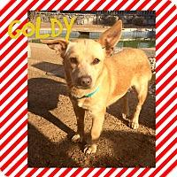 Adopt A Pet :: GOLDIE - HAGGERSTOWN, MD