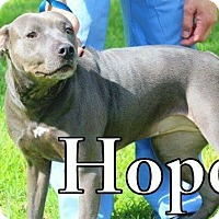 Adopt A Pet :: Hope - Spring, TX