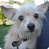Adopt A Pet :: Lil Man - Orange Park, FL