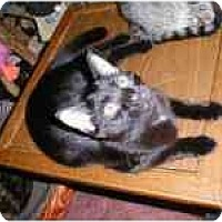 Adopt A Pet :: Bagherra - Proctor, MN