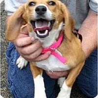 Adopt A Pet :: Precious - Portland, OR