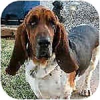 Adopt A Pet :: Radar - Phoenix, AZ