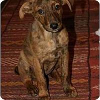 Adopt A Pet :: Etta - Vancouver, BC